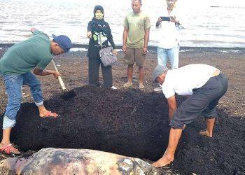 Dugong ditemukan terdampar di Riau. FOTO: KSDAE/LHK