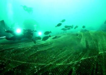 Penyelam mengangkat jaring hantu (Ghost nets) yang menutupi terumbu karang di kawasan lindung di Ko Losin, Thailand. Potongan Video/REUTERS.COM