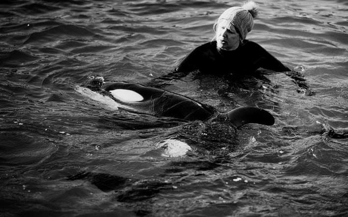 Selasa (13/7) hari ini bayi orca yang terdampar di Plimmerton, Wellington mendapatkan nama Toa. Tim penyelamat dan sukarelawan merawat bayi orca dan berupaya untuk menyatukan kembali dengan keluarga dan kerabatnya. FOTO: DOM THOMAS/RNZ