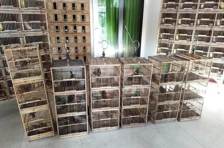 Petugas gabungan di Kalimantan Timur menggagalkan penyelundupan dan perdagangan ilegal 597 ekor burung yang akan dikirim ke Surabaya Provinsi Jawa Timur dan Pare-pare Sulawesi Selatan. FOTO: KLHK