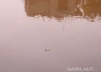 Ilustrasi daerah aliran sungai (DAS). FOTO: DARILAUT.ID