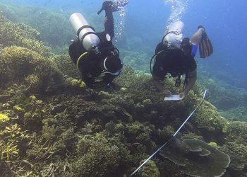 Monitoring terumbu karang di kawasan Taman Nasional Komodo. FOTO: KSDAE/KLHK
