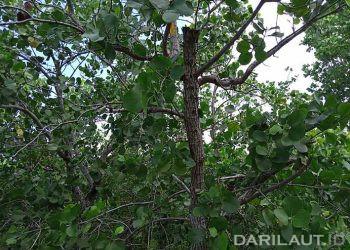 Hutan mangrove, FOTO: DARILAUT.ID