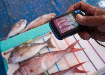 Melalui program Crew Operating Data Recording System (CODRS) nelayan secara aktif mendata hasil tangkapan ikan di atas papan ukur.  Dengan data ini dapat diperoleh gambaran terkini mengenai kakap dan kerapu. FOTO: YKAN