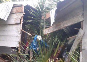 Pohon tumbang akibat angin kencang di Kabupaten Kepulauan Talaud, Provinsi Sulawesi Utara, pada Jumat (17/9). FOTO: BPBD Kabupaten Kepulauan Talaud/BNPB